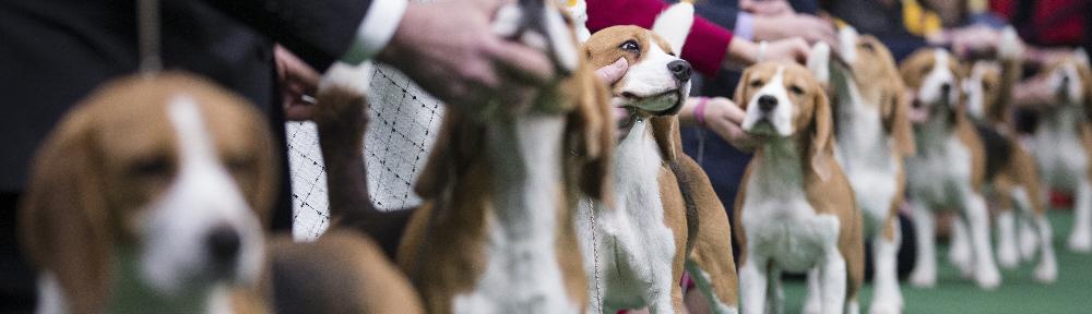 Bluegrass Classic Dog Show